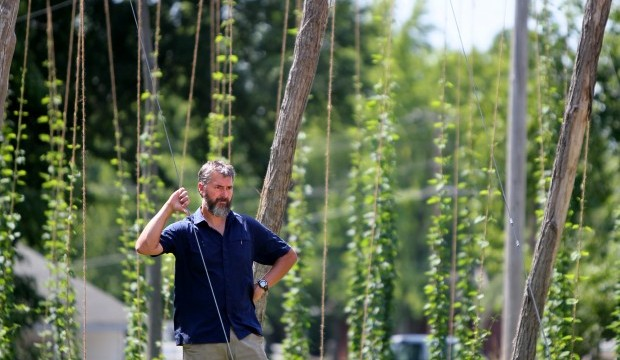 The real reasons behind rising hops prices